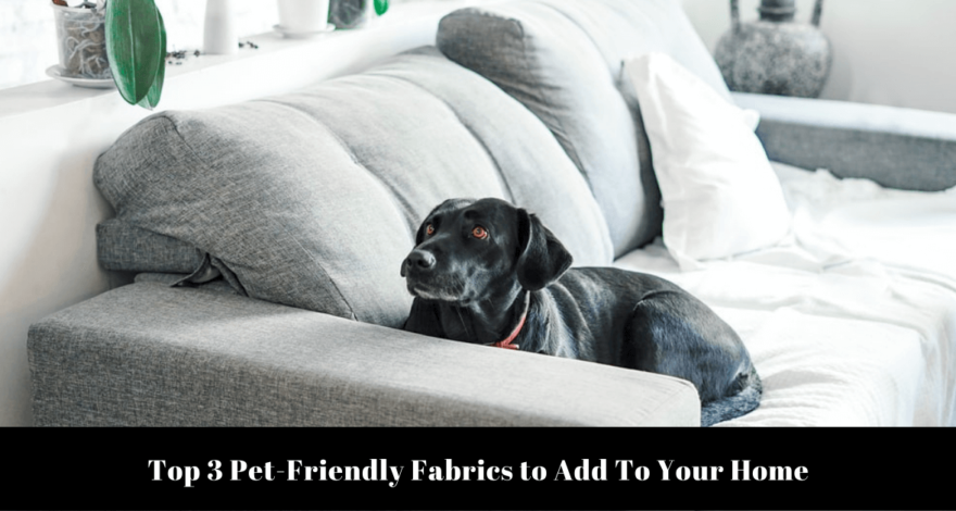Top 3 Pet-Friendly Fabrics to Add To Your Home